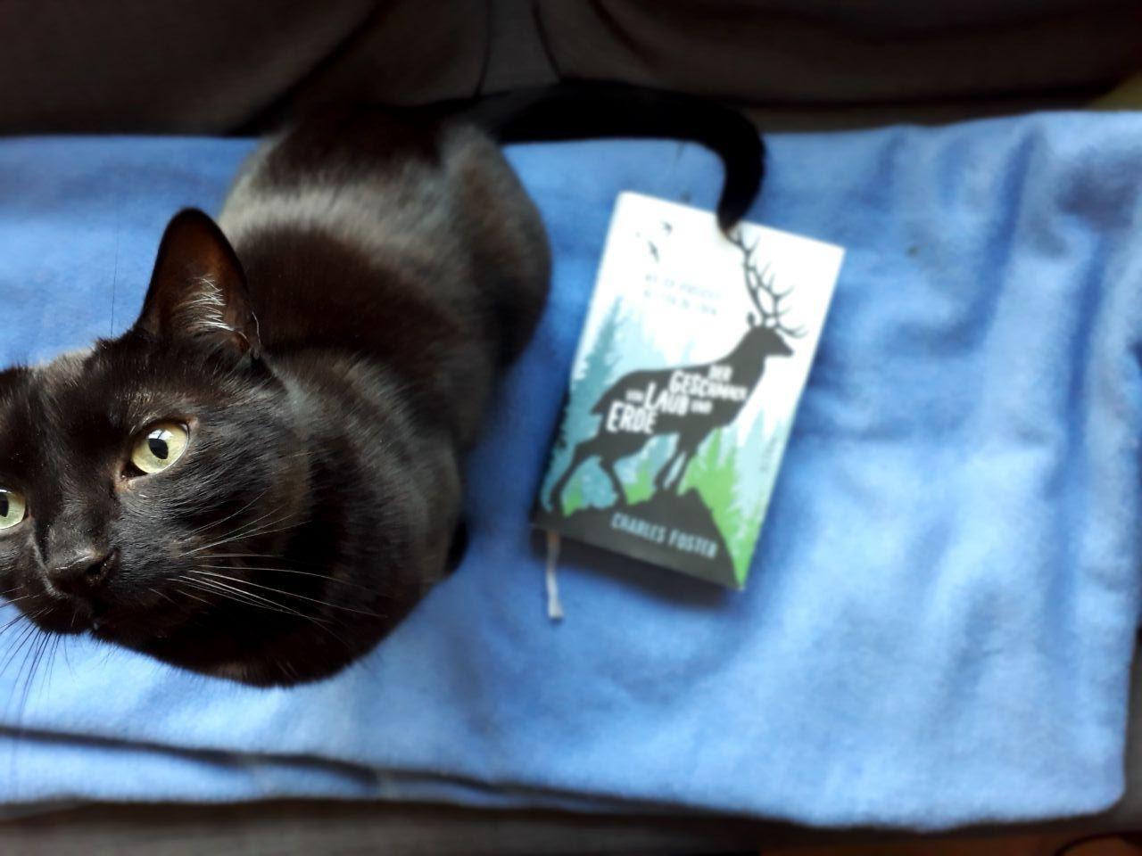 Katze und Charles Foster, Der Geschmack von Laub und Erde